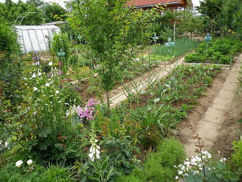 Půdu pro česnek pohnojte raději některým průmyslovým hnojivem