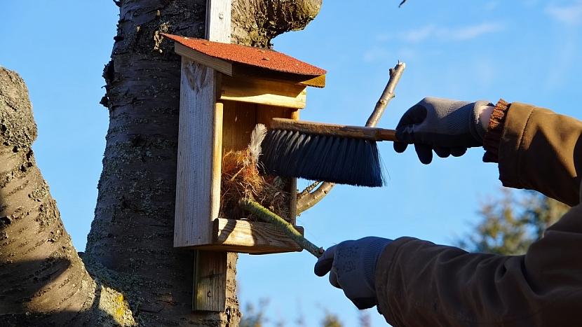 Vyčištěním ptačí budky odstraníme kromě starého hnízda také hnízdní parazity.