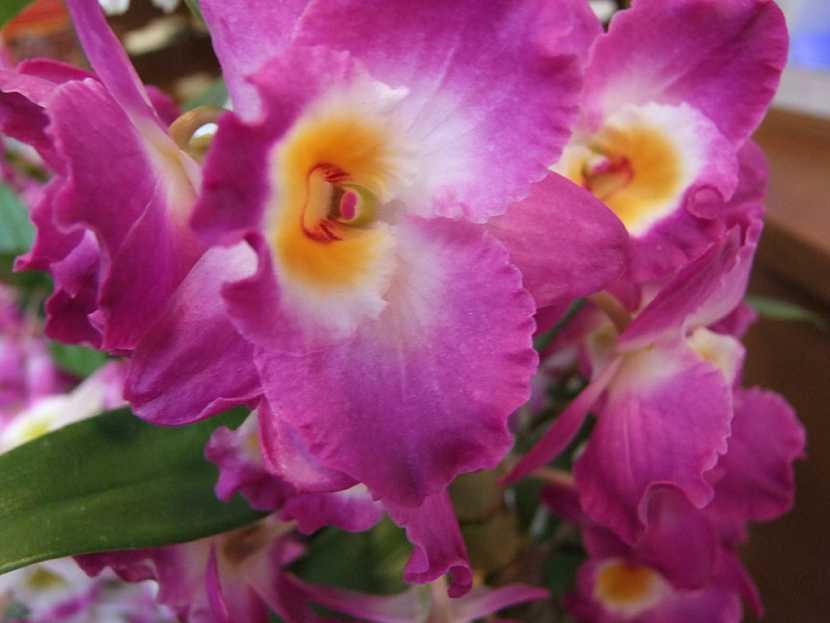 Víte, jak přesadit orchidej?