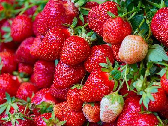 Na podzim nezapomeňte na novou výsadbu jahod (Zdroj: Depositphotos)