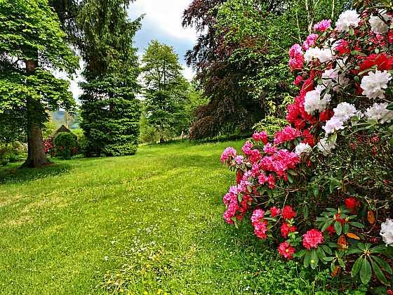Doprovodné rostliny pro pěnišníky (Zdroj: Depositphotos)