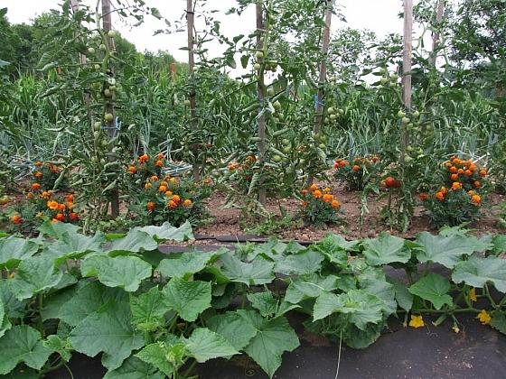 Střídání plodin na záhonech vyžaduje plánování