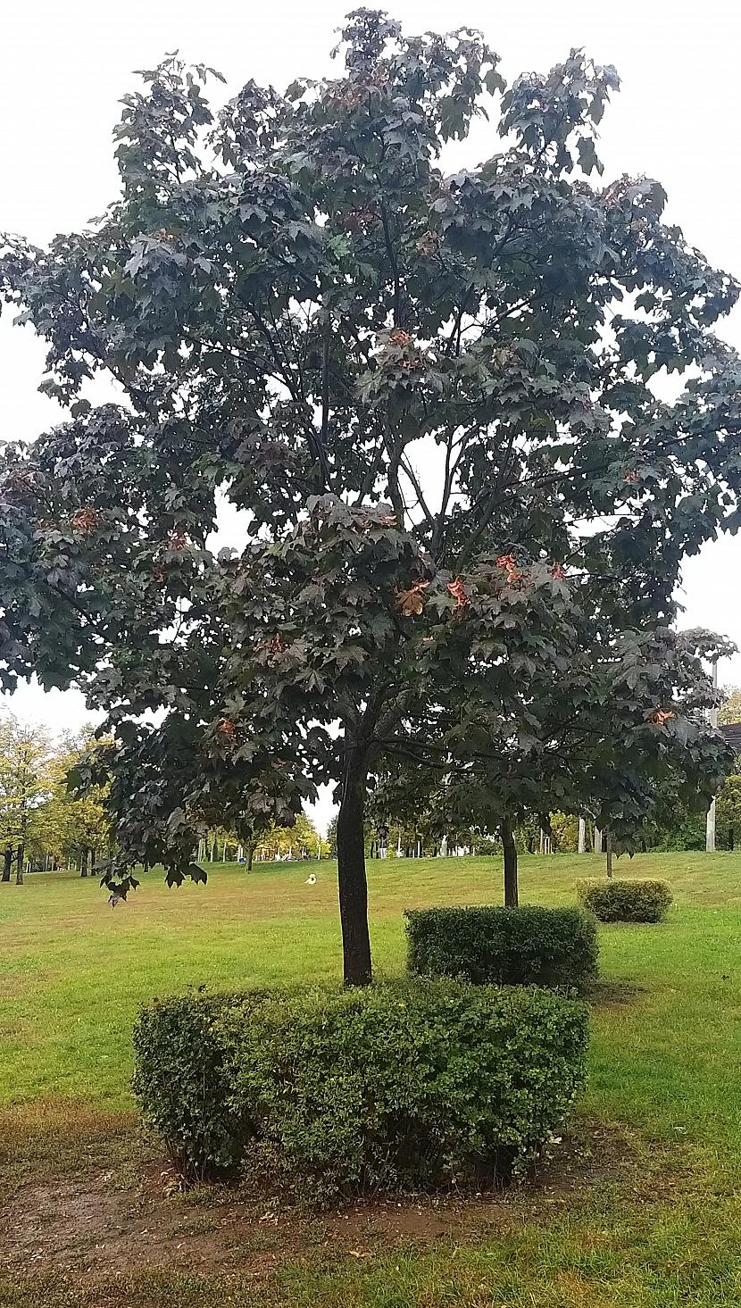 Keře okolo stromků