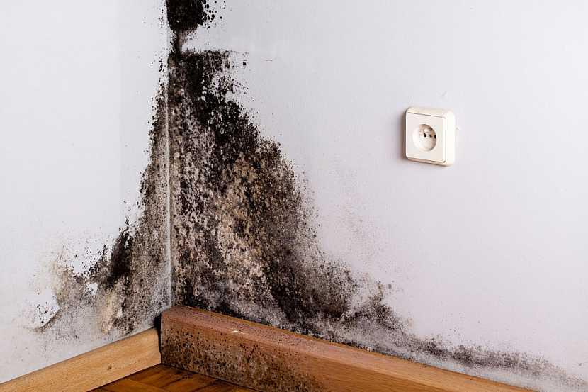 Plíseň na zdi se velmi rychle natáhne do dřeva a zničí ho