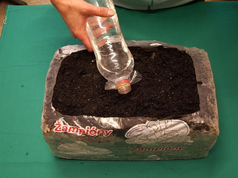 Vyplatí se jemné kropení pomocí propíchaného sáčku připevněného gumičkou na PET láhvi