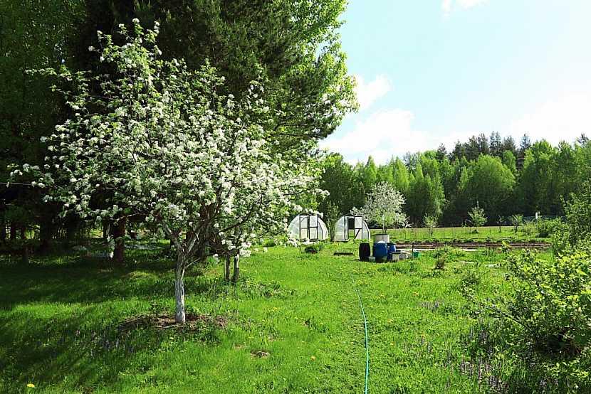 Prostor pod ovocnými stromy osázejte, pomůžete tím k udržování vláhy v půdě