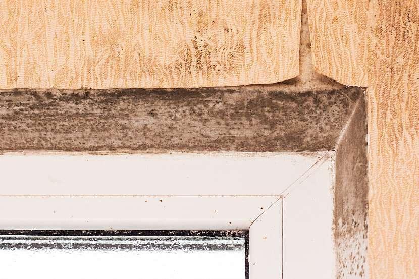 Tapetu napadenou plísní bezpodmínečně odstraňte a plíseň pod ní zlikvidujte