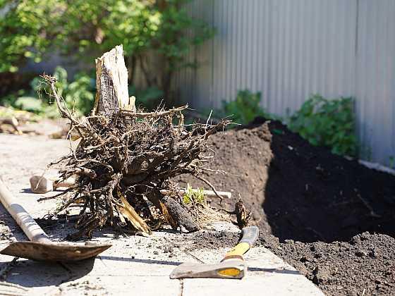 Odstranění pařezu ručně volte jen u menších stromů či keřů (Zdroj: Depositphotos)
