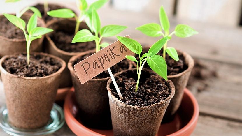 Předpěstování zeleniny: jednotlivé druhy zeleniny nezapomeňte označit jmenovkou