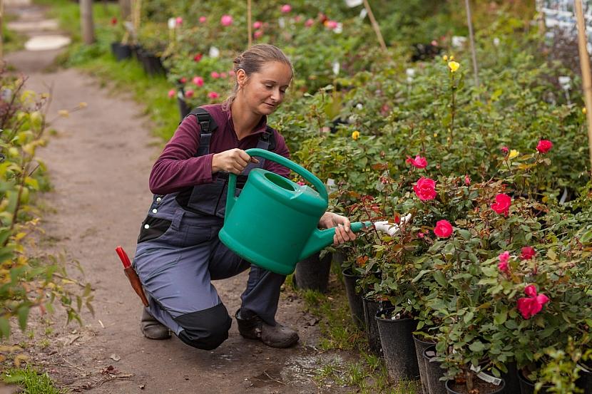 Kupujte jen kvalitní a certifikované růže