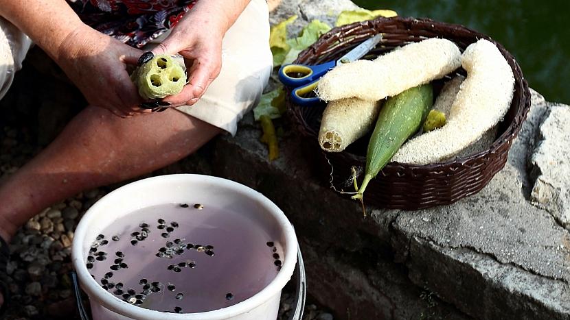 Lufa: semena necháme proschnout, uložíme a na jaře je zasadíme