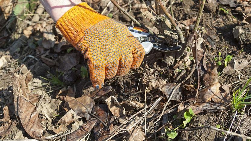 Odstranění poškozených a suchých větví