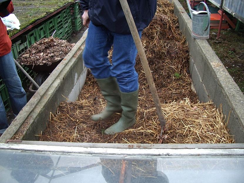 Sešlapávání hnoje do pařeniště