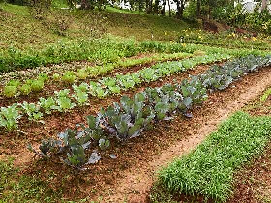 Na úrodné a dobře vyživované půdě se zelenině velmi daří (Zdroj: Depositphotos (https://cz.depositphotos.com))