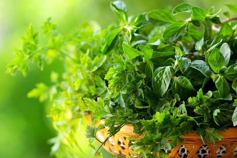 Bylinky můžete po sklizni usušit nebo zamrazit pro pozdější použití