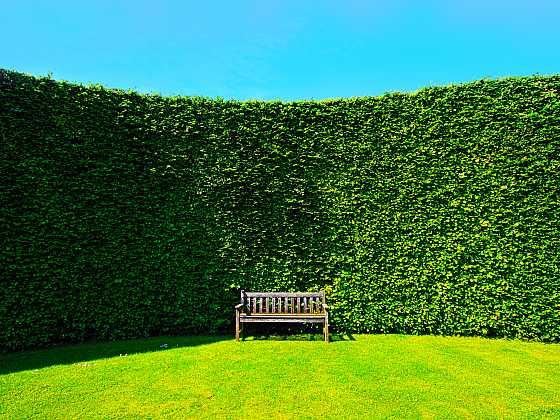 Živým plotem ozvláštníte zahradu (Zdroj: Depositphotos)