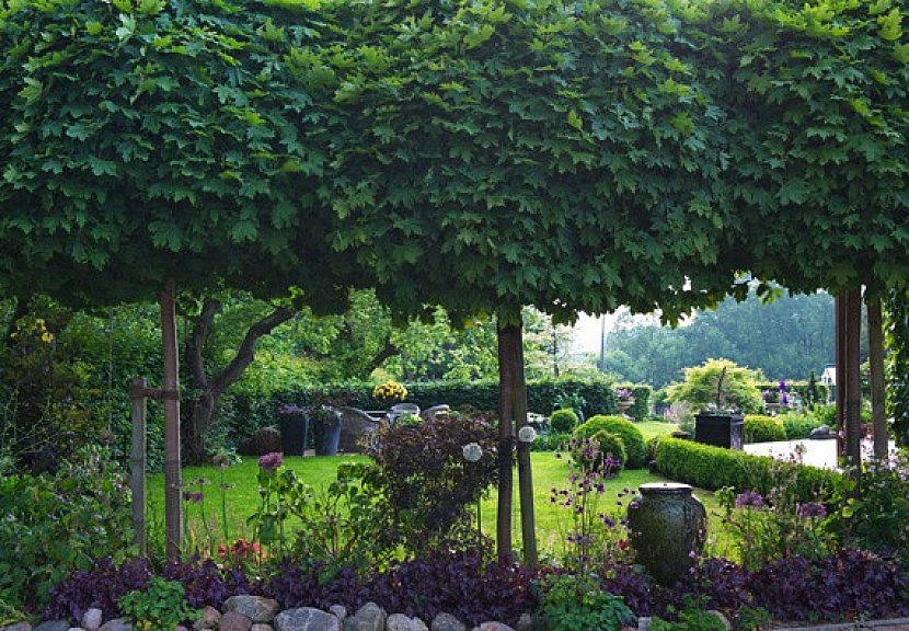 Tip: Nejkrásnější kulatý tvar koruny mají kulaté javory, akáty a katalpy.