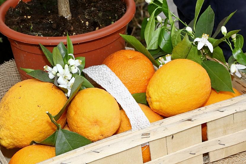Roubování citrusů: Jak zkrátit dobu od vysetí semínka po první sklizeň