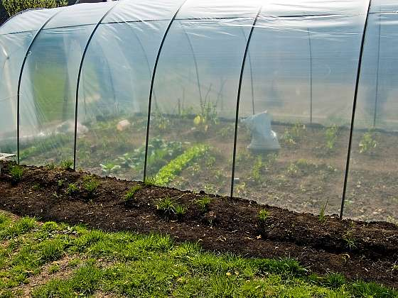 Ve skleníku musíte také bojovat proti škůdcům, je důležité začít včas (Zdroj: Depositphotos)