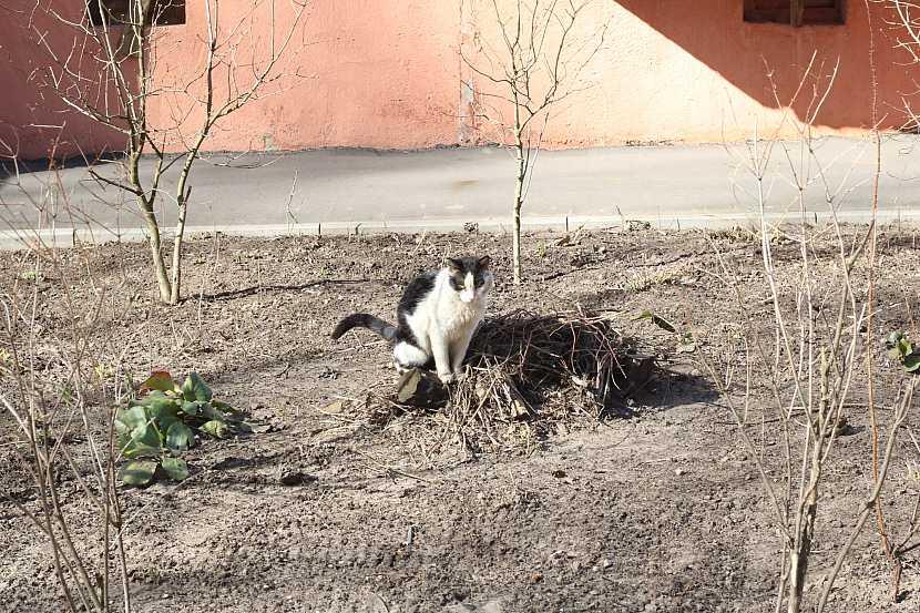 Kočka v záhoně