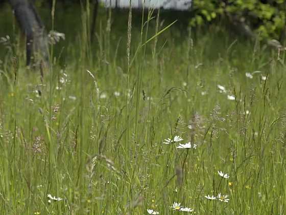Posekanou trávu využijeme nejen v kompostu (Zdroj: Prima DOMA)