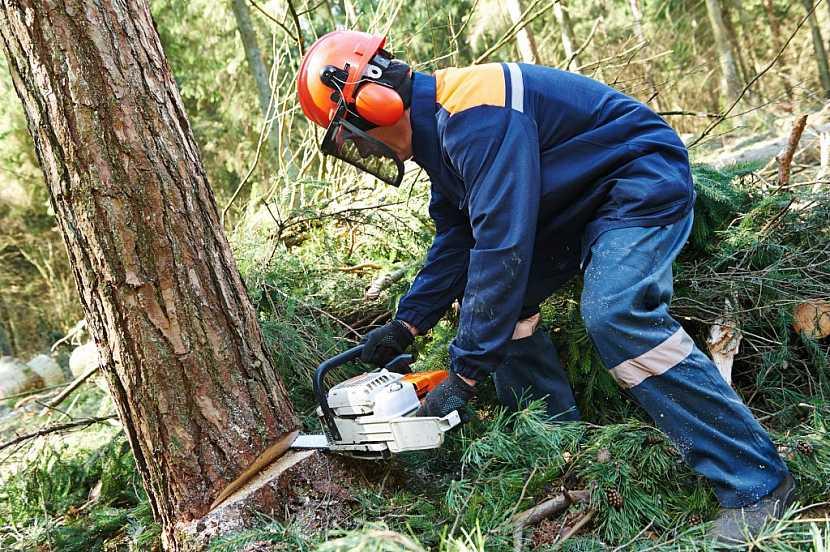 Dřevorubci často sáhnou hlouběji do kapsy a pořídí si kvalitní oblečení