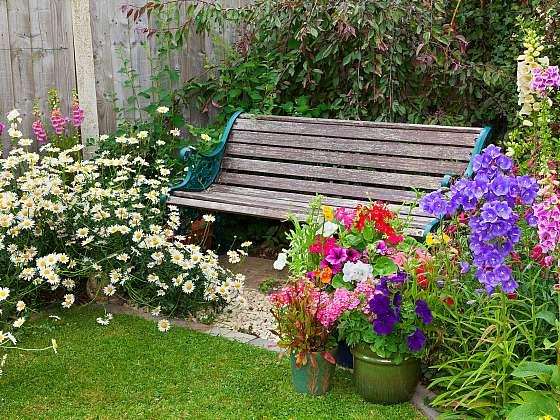 Vyvarujte se chyb při pěstování rostlin (Zdroj: Depositphotos)