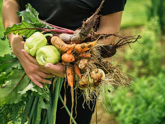 Velkou úrodu můžete mít, ale je pro to zapotřebí něco udělat (Zdroj: Depositphotos)