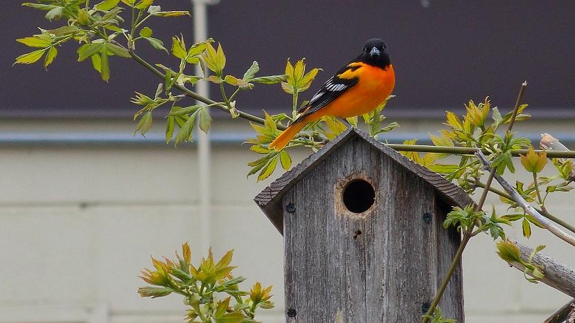Jak dopřát užitečným ptákům na zahradě bydlení na míru 3
