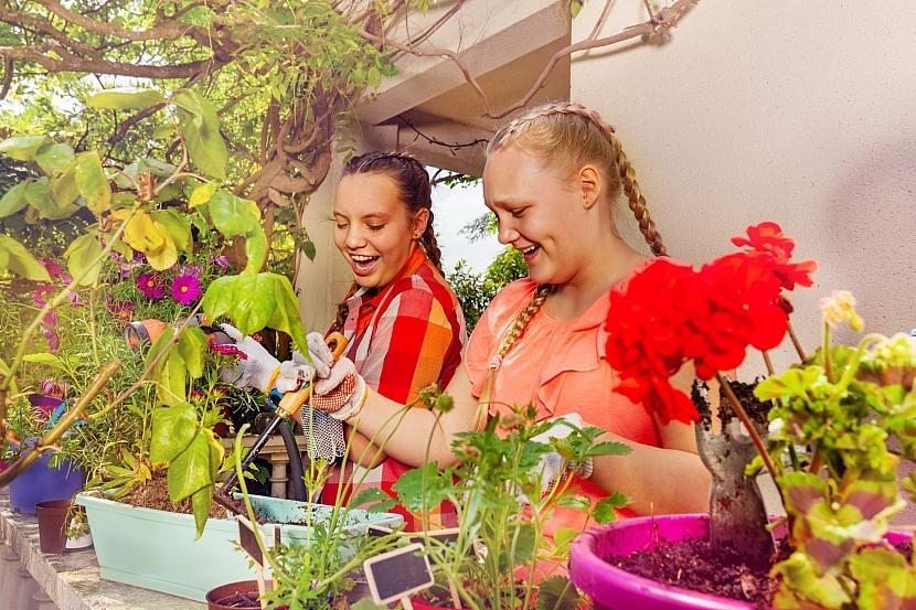 Přezimující rostliny je potřeba na jaře přesadit