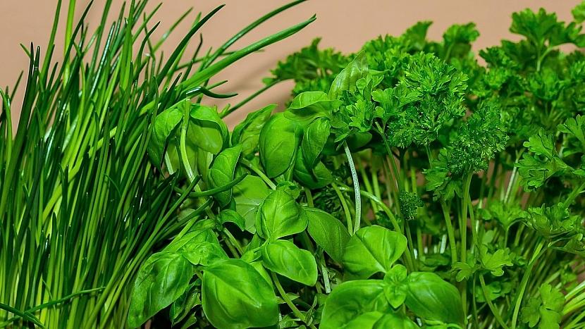 Domácí pěstování bylin a koření: petrželka, bazalka nebo pažitka výborně rostou ze semen