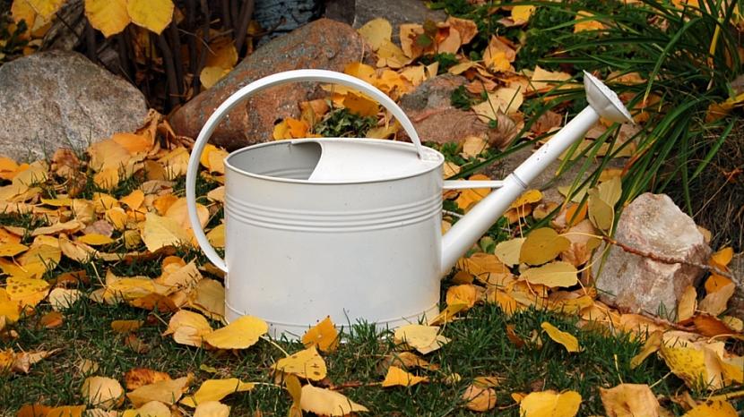 Jak připravit zahradu na zimu: pravidelně zalévejte hlavně nově vysazené stromy, keře a trvalky