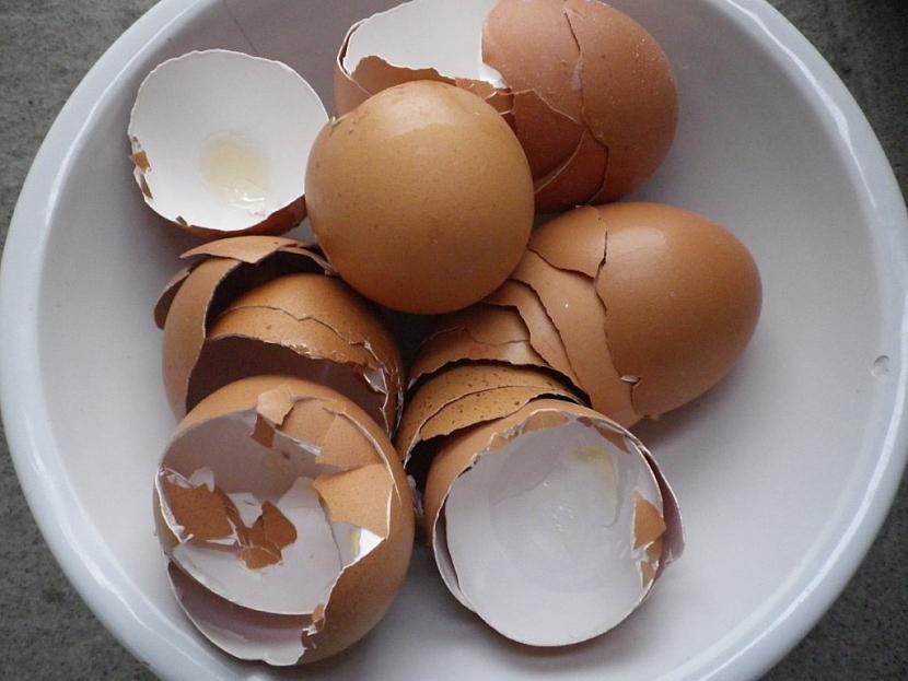 Roztlučené vaječné skořápky jsou pro plže překážkou