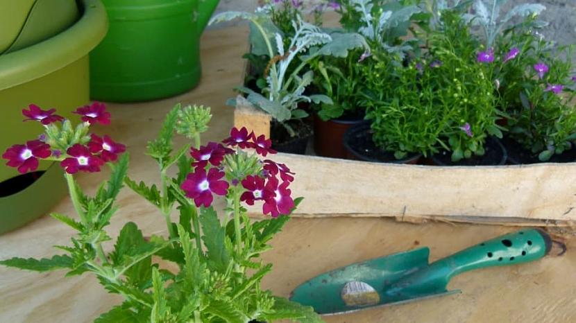 Jak zařídit, abychom měli na oknech v truhlíku krásně rozkvetlé květiny po celé léto 6