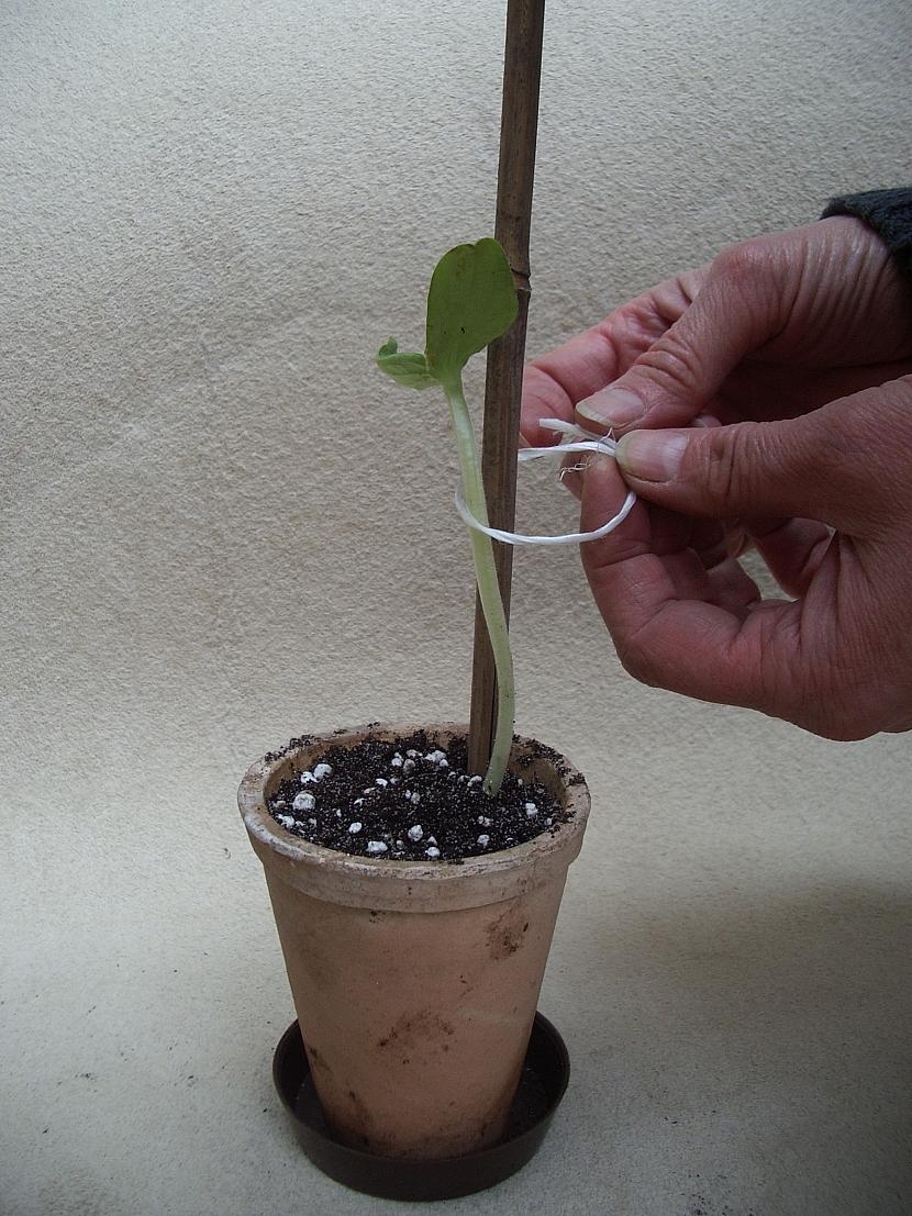 5.vyvazani rostliny