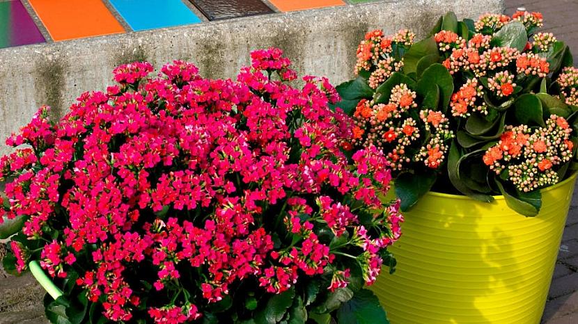 Jak můžete vyzdobit balkon méně tradičními květinami 4