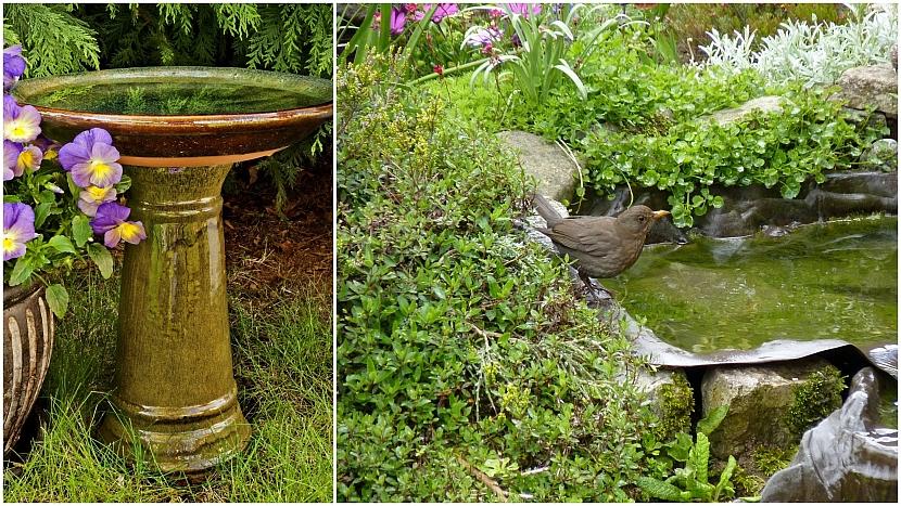 Zahradní koupadla a jezírka