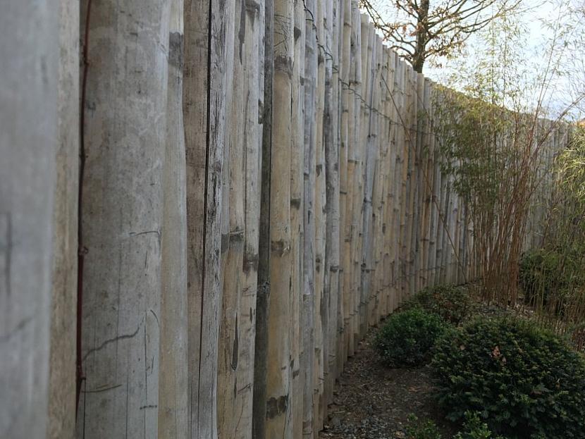 Bambus v japonské zahradě
