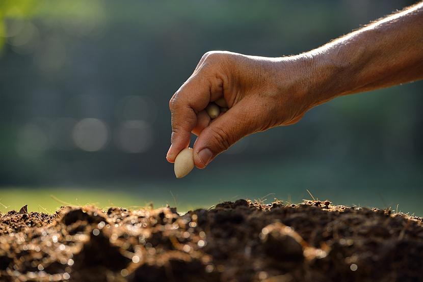 Jak přitáhnout děti k zahradničení? Vsaďte na fazole! 2