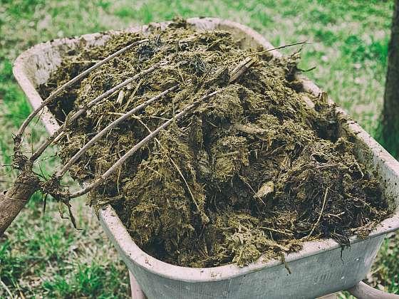 Hnůj má v zahradě svoje neodmyslitelné místo jako vynikající zdroj živin (Zdroj: Depositphotos (https://cz.depositphotos.com))