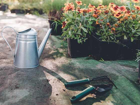 Užitečné informace, které byste o rostlinách měli vědět (Zdroj: Depositphotos)