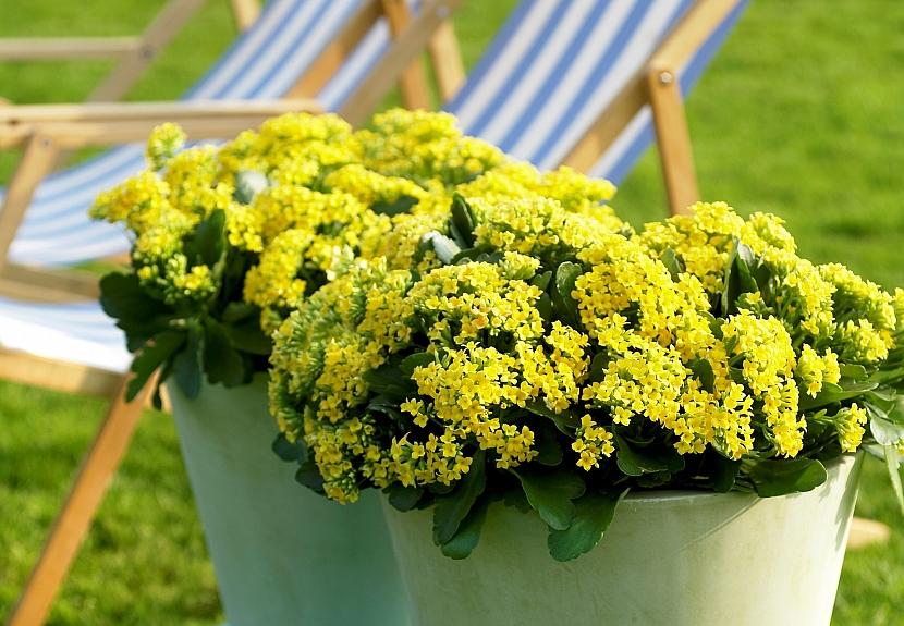 Jak můžete vyzdobit balkon méně tradičními květinami 5