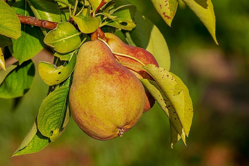 Sklízejte ovoce i zeleninu, nenechte je přezrát
