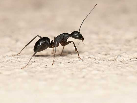 Přemnožení mravenci okolo domu a v zahradě můžou způsobit velké škody (Zdroj: Depositphotos)