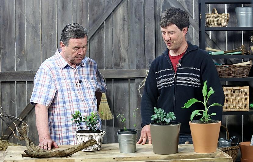 Jak se vyznat v rostlinách s exotickými jmény 3