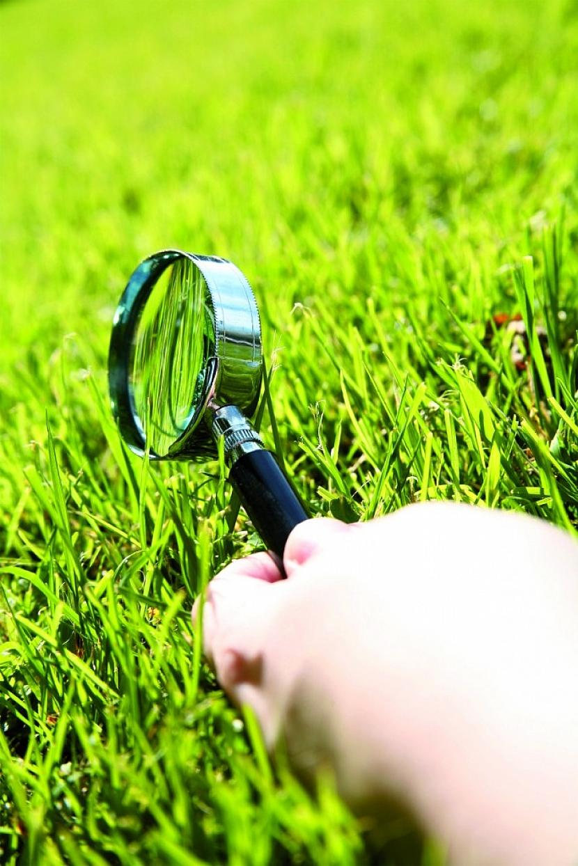 Floria: Výživa pro trávník