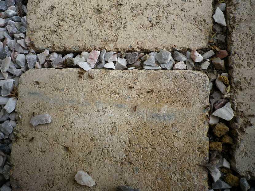 Mravenci v dlažbě u domu