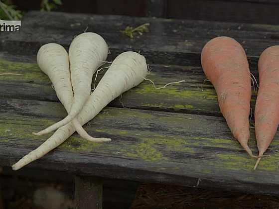 Kdy vysévat a vysazovat ozimou zeleninu? (Zdroj: Prima DOMA)