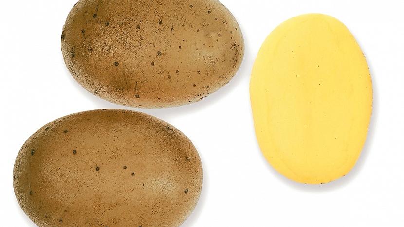Brambory: raná až poloraná odrůda VYSOČINA