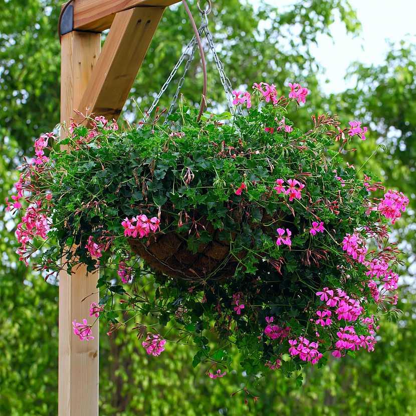 převislé květiny na pergolu